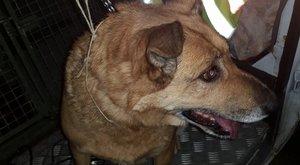 50 kilométert vonatozott félelmében Betty kutya