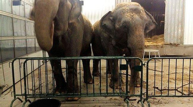 Elhagyta elefántjait a fantomcirkusz