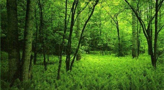 Horror hallucináció- 12 éves lány késelt az erdőben