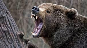 Medve harapott lábon egy zarándokot a Szent Anna-tónál