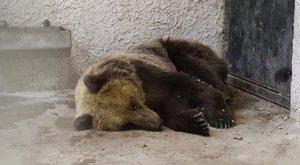 Méznapokkal várja a medvét a falu