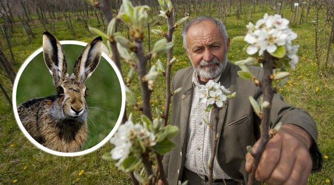 Állatok pusztítják a világon egyedülálló gyümölcsbankot