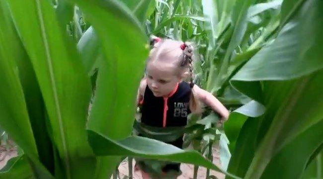 Elveszett a 3 éves kislány a kukoricamezőn, de egy percig nem volt egyedül – videó