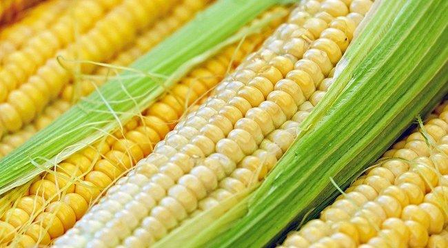 Gasztro magazin: Édes majszolnivaló - a kukorica