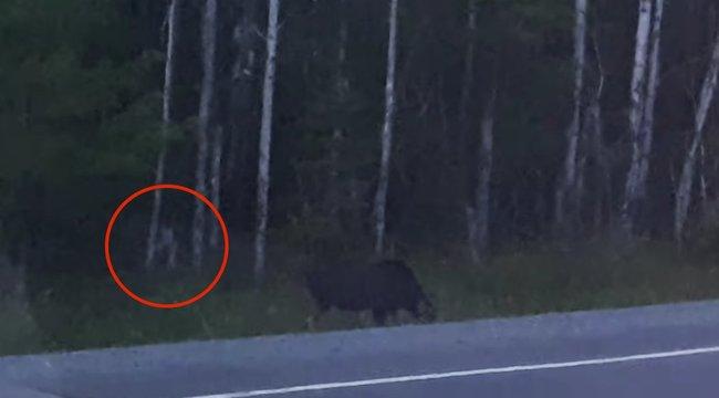 Kísérteties emberszerű lény bukkant fel az erdőben – videó