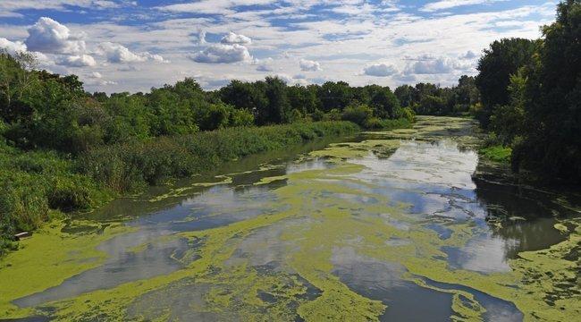 Durva pusztítást végez az algák burjánzása Floridában