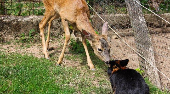 Milyen emberek vannak?! Ellopták a parádfürdői állatkert lakóit