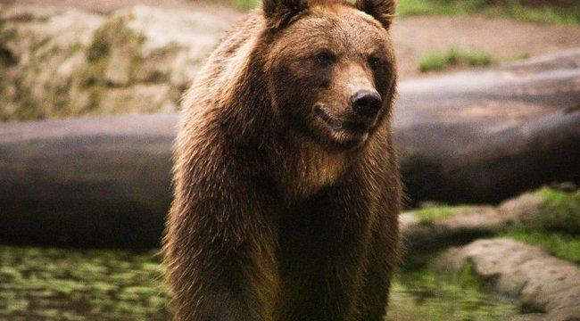 Sokkoló: majdnem belehalt a medvetámadásba a csíkszentkirályi férfi