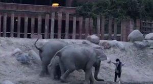 Beugrott az elefántokhoz, aztán jött rá, hogy mégsem volt ez olyan jó ötlet