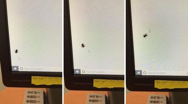 Napi cuki: így fogócskázik egy pók a kurzorral – videó