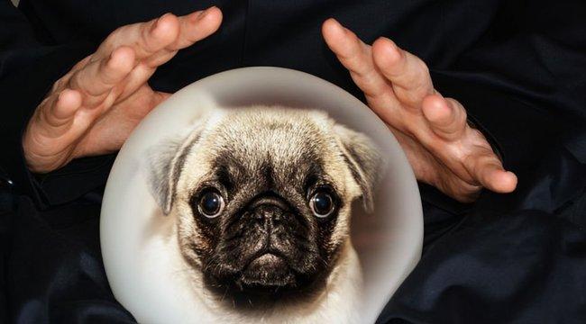 Telefonon rendel az állatok nyelvén értő médium - nevetni fog, ha megtudja, miért
