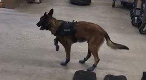 Téli cipővel ajándékozták meg a rendőrkutyákat, röhejes az ebek reakciója - videó