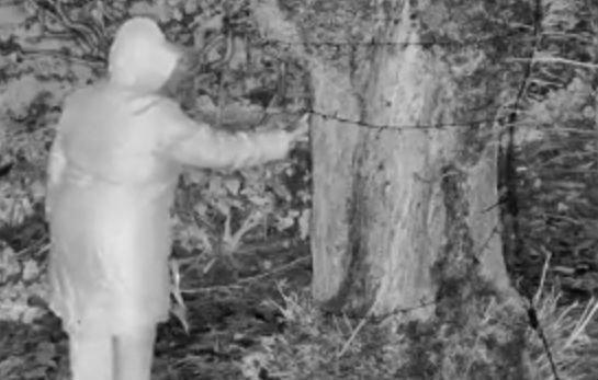 Az sem érdekelte az asszonyt, ha meghal, csak szomszédjának kárt okozhasson - videó