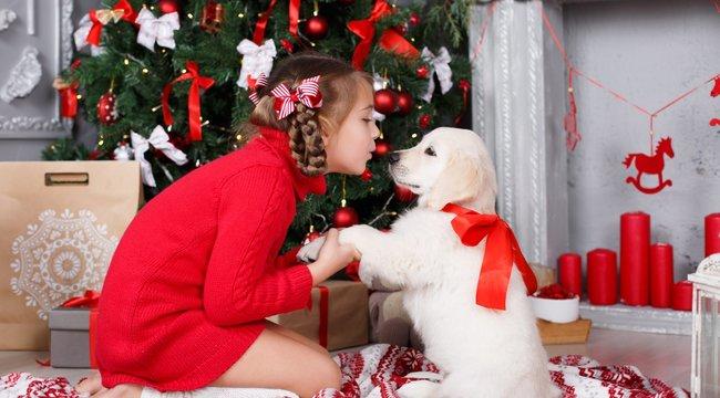 Az élő állat rosszkarácsonyi ajándék!