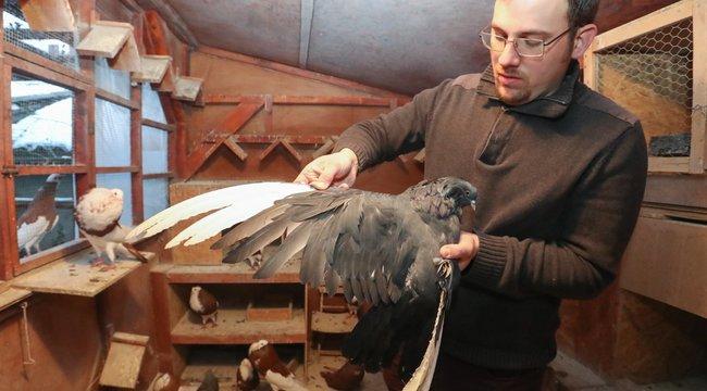 Kihalástól mentette meg a galambokat Bence