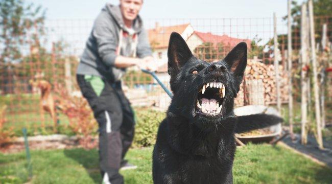 Agyunkra megy a kutyaugatás, mert babasíráshoz hasonlít