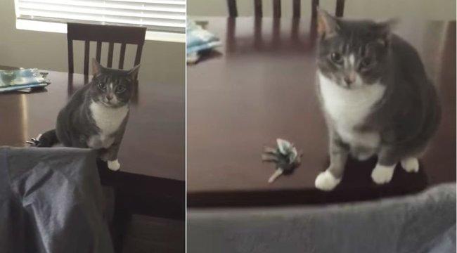 Ilyen, amikor a macskánk tényleg mindent megtesz azért, hogy otthon maradjunk - videó