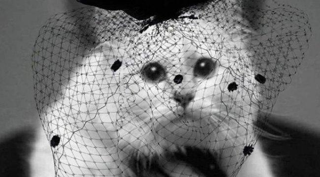 """Karl Lagerfeld cicája, Choupette saját közösségi oldalán """"köszönte meg"""" a részvétnyilvánításokat"""