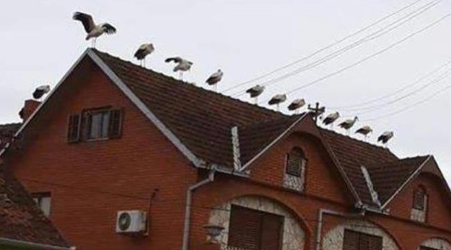 Háztetőn bandáztak az érkező gólyák