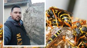 Darázsinvázió - óriási kaptárszörny hízott Kecskeméten