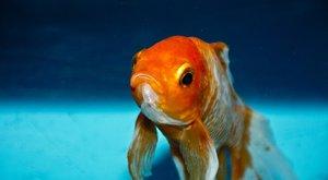 Örökre megváltoztatta a pár életet az, amit egy hal gyomrában találtak