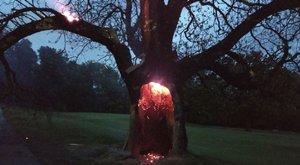 Még a tűzoltók sem láttak olyan lenyűgöző jelenséget, mint ez a belülről égő fa – fotó