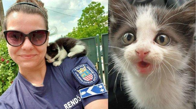Rendőrnők mentették meg a motorháztető alá bemászott cicát