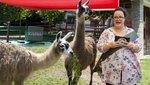Állati esküvő - Két lámát adott össze Balázs Andi