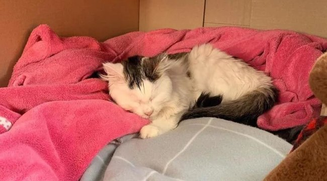 Kis híján a macska életébe került, hogy a sólámpát nyalogatta