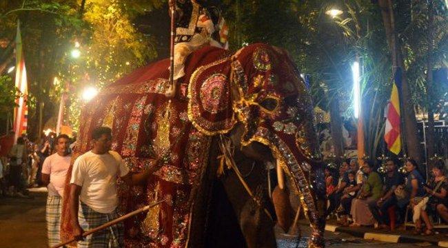 Szívszorító! Jelmezbe bújtatott, csontsoványra fogyott elefánt kénytelen menetelni a vallási ünnepen