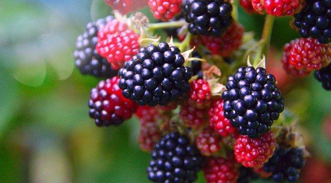 Fiatalosabbá és feszesebbé teszi a bőrt ez az apró erdei gyümölcs