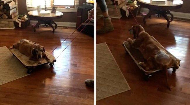 Cukiság! Gazdija különleges kocsit készített a reumás kutyusnak – videó