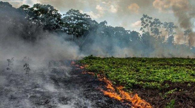 Lángokban áll a világ tüdeje– Együtt imádkoznak a hazai és a külföldi celebek