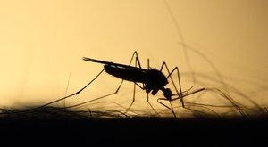 Rémálmainkban se forduljon elő: szúnyog költözött egy nő fülébe - videó