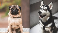 Cukiságbomba! Ez történik, ha különböző fajtájú kutyusok szerelembe esnek – fotók