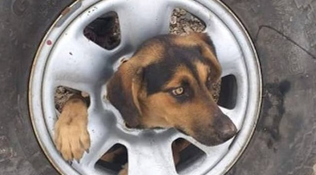 Autókerékbe szorult a kutyakölyök