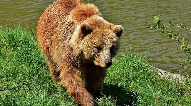 Bot és kereplő a fegyver a medve ellen