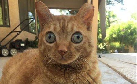 Oda vannak az internetezők az óriási szemű macskáért