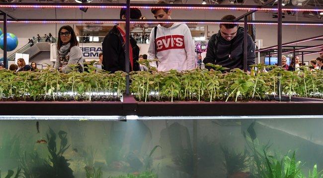 Halak ürülékétől lesz egészségesebb a saláta - forradalmi újítás a növénytermesztésben