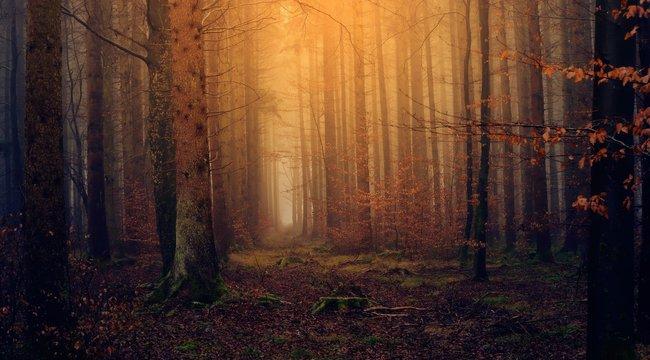 Szívszorító: Hiányos öltözetben bujkált napokig az erdőben egy bántalmazott nő