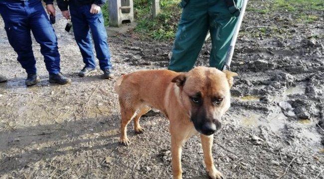 Tagadja a felelősségét a gazda, akinek a kiszökött kutyája két tucat terápiás jószágot téphetett szét