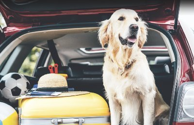 A Bors utánajárt:Csak egy csomag a kutya a KRESZ szerint