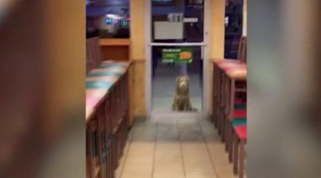 Nem fogja kitalálni, miért áll ez a kutyus minden este zárás előtt a szendvicsező ajtaja előtt