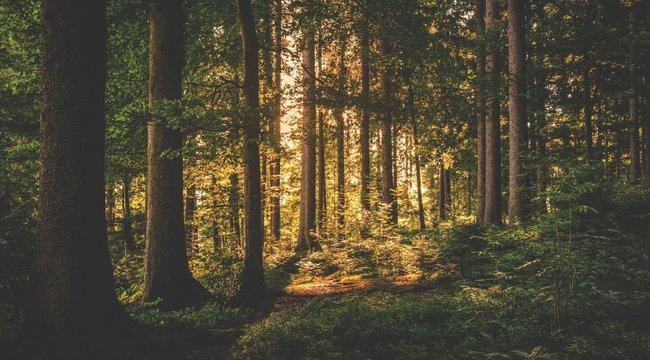 Gyereksírást hallottak az erdőből, a rendőrök megtalálták a hang forrását, és alig akartak hinni a szemüknek