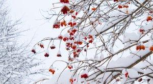Kíméletlenül lecsap az időjárás Valentin-napon: eső és havazás is jön