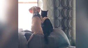 A kutya és macska barátságra ez a videó lehetne a definíció