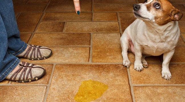 Mi a teendő, ha a kutyája galibát okozott?