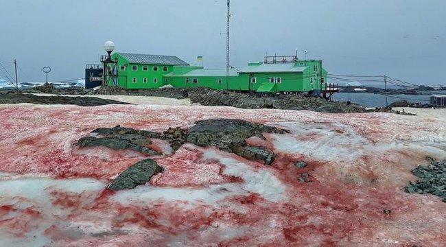 Piros hó fedi azAntarktiszt