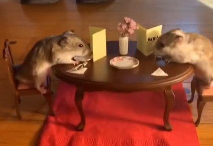 Lehet annál cukibb, mint amikor két hörcsög romantikázik egy aprócska asztalnál? Ugye hogy nem! videó