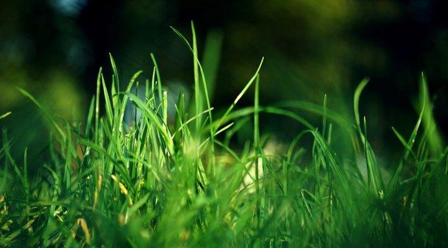A szabályokra fittyet hányva szexelt a parkban egy brit pár, de a magas fű nem takarta el őket